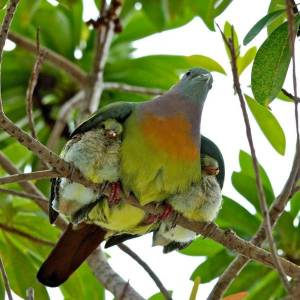 God gave birth to Israel and nurtured them as a bird does her young