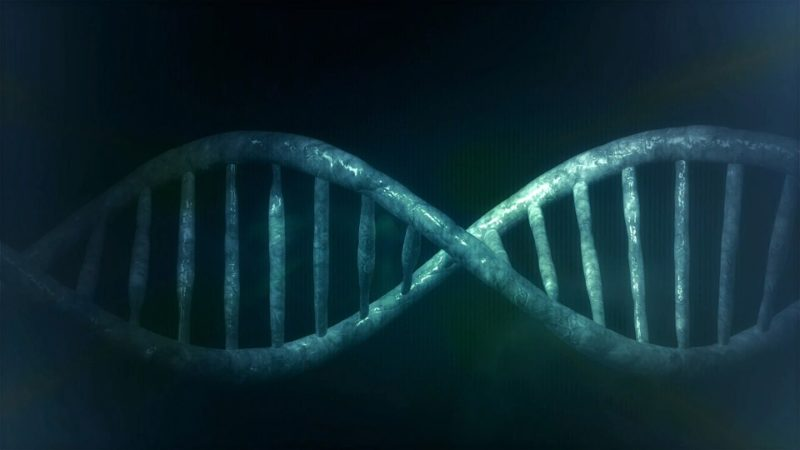 the DNA helix speaks of clarity in the creation
